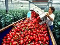 Fókuszban a tőke import a dél-alföldi régióban