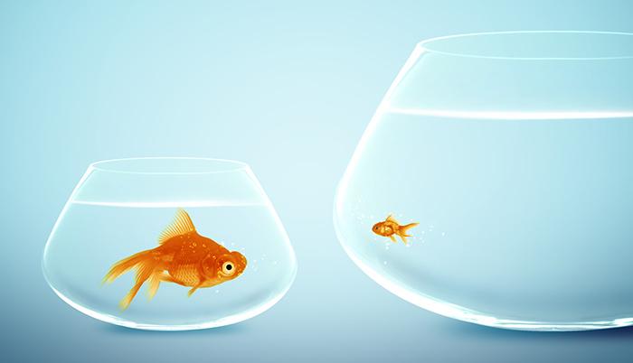 Kis cég vagy nagy vállalat? Kinek melyik munkahely való?