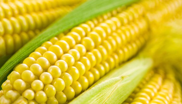 Háromszázmillió kukoricakonzervet állított elő idén a Bonduelle