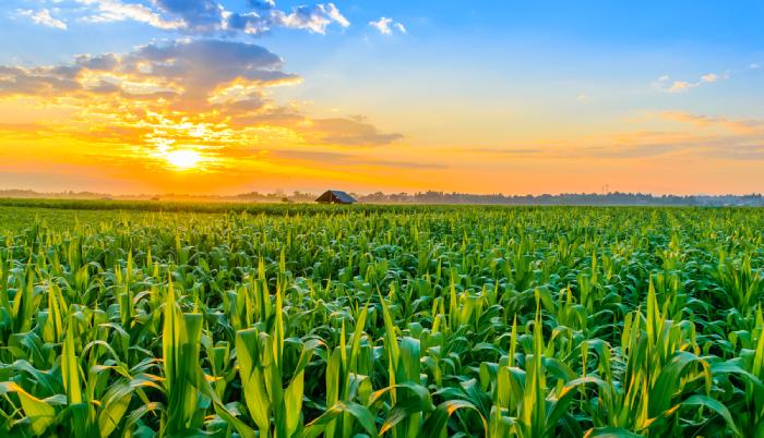 Munka a mezőgazdaságban