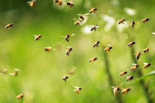 A szakmaválasztás ezer arca: a méhész szakma rejtelmei