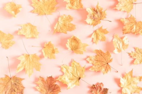 Itt van az ősz, itt van újra! - ősz, munka, visszatérés