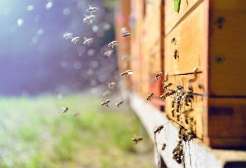 Támogatás a méhészeknek